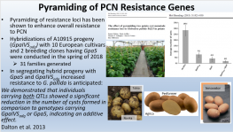 Introgression of Globodera Resistance into the Russet Market Class